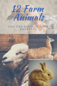 12 Farm Animals that can be raised in a backyard (1)