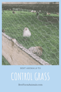 Animals to control landscaping (1)