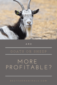 Are goats more profitable than sheep (1)