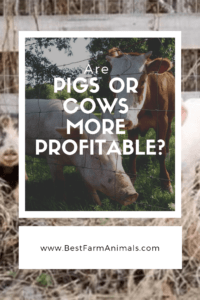 Are pigs or cows more profitable (2) (1)