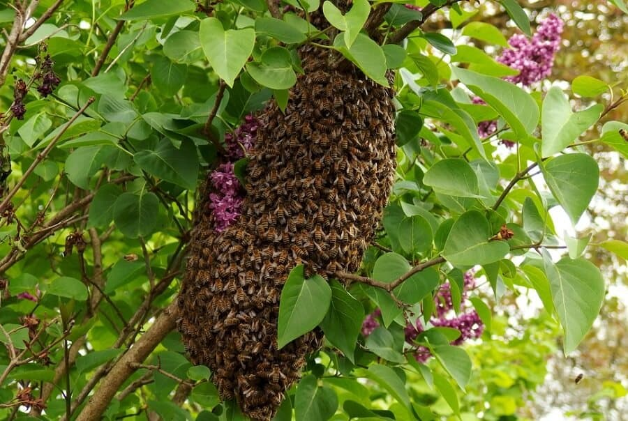 Beehive in a cone shape