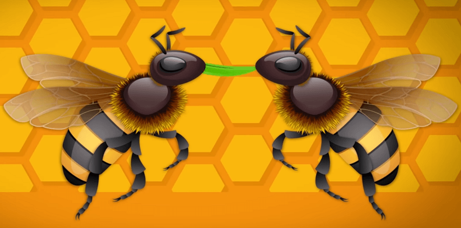 Bees make honey by spitting it to other bees mouths