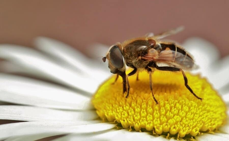Bees make nectar and then honey