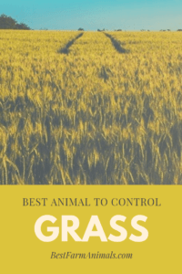 Best Animal to control Grass (1)