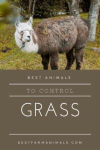 Best Animals to mow grass (1)