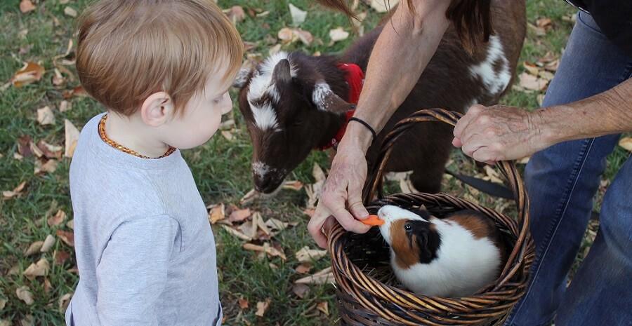 Best farm animals for kids