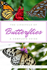 Cycles of a butterfly's life (1)