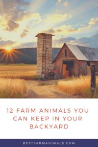 Farm animals you can raise in your backyard (1)