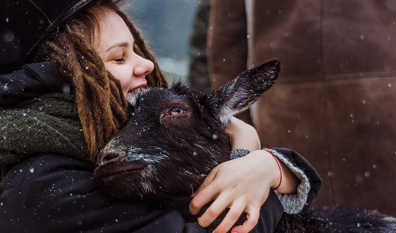 Goats are kid friendly farm animals