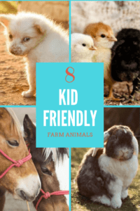 Great farm animals for kids (1)