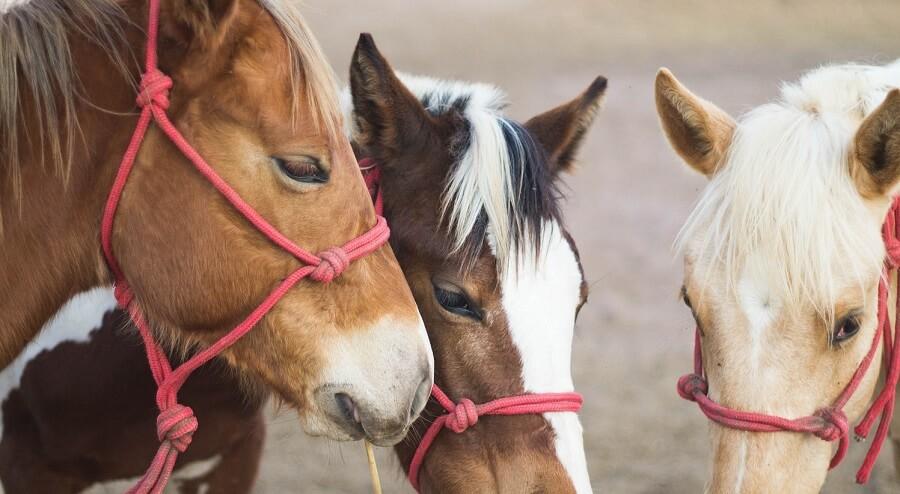 Horses are kid friendly farm animals
