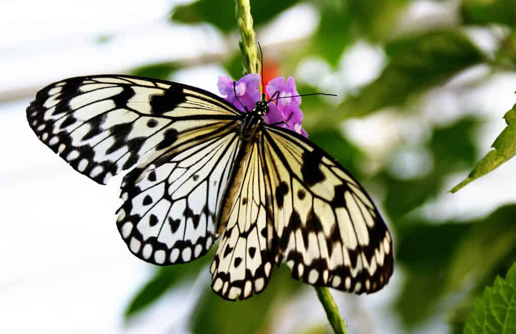 How to grow a butterfly