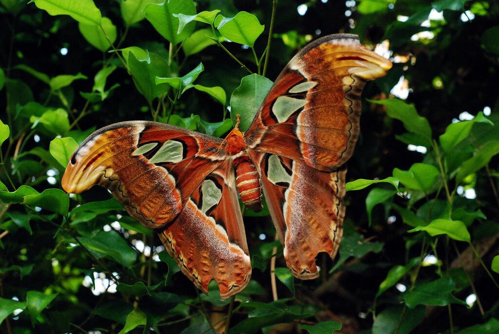How to raise a butterfly caterpillar