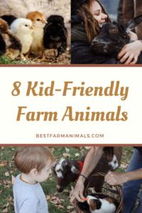 Kid friendly farm animals (1)