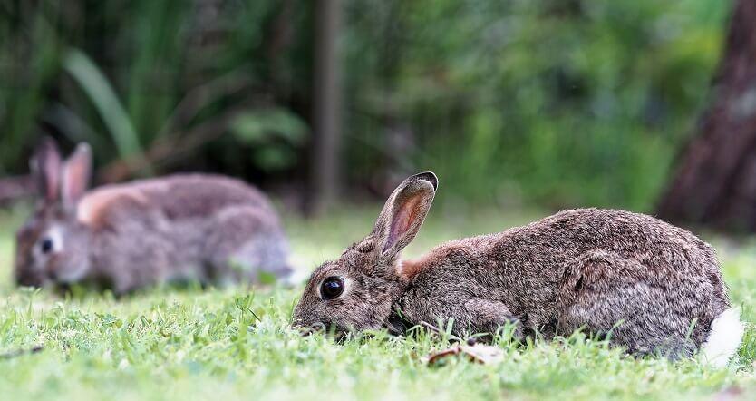 Rabbits are kid friendly farm animals
