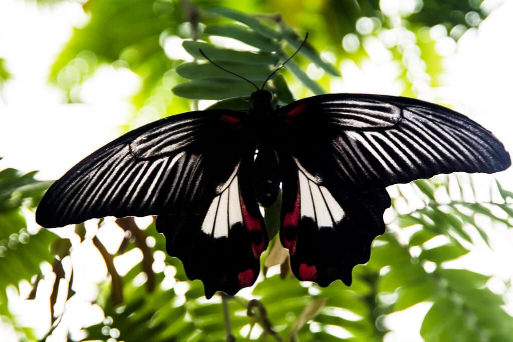 Raise a butterfly