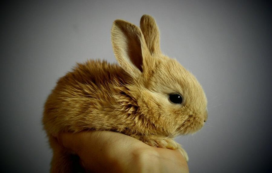 Raising Rabbits for money