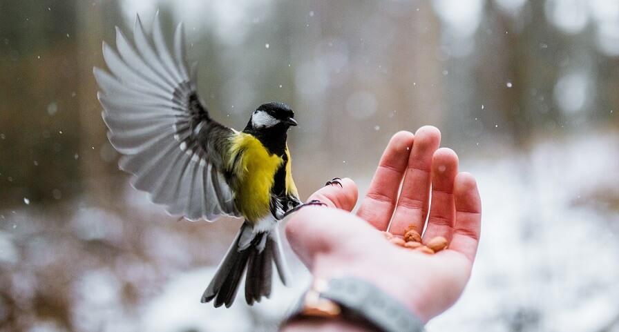 Raising birds for money