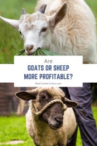 Sheep or goats more profitable (1)