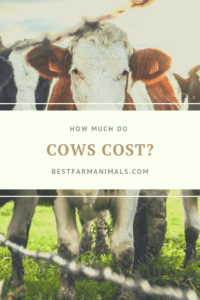 The cost of a cow (1)