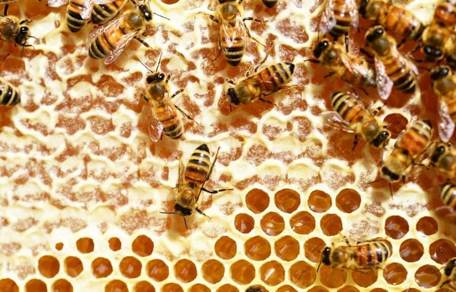 Bees make wax from honey