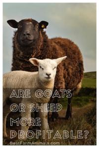 are sheep more profitable than goats (1)