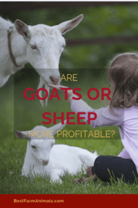 are sheep or goats more profitable (1)