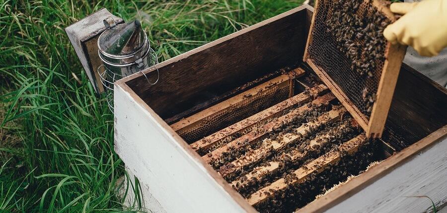 backyard farm animals honey bees