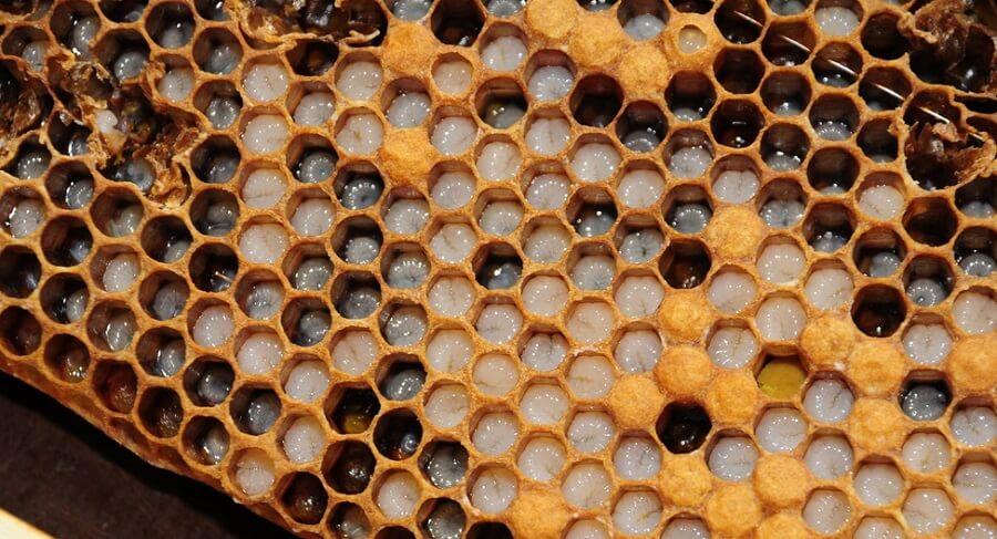 bee larvae in honeycomb