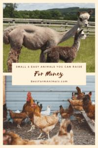easy animals for money (1)