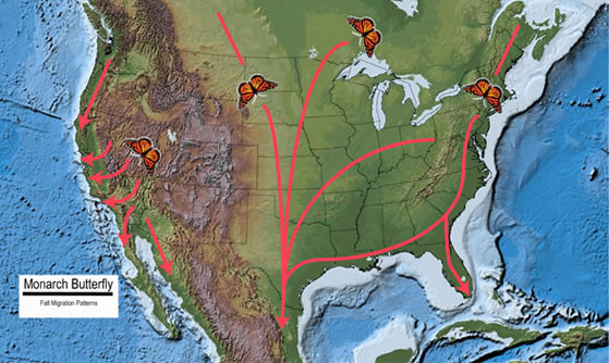 fall migration map of monarch butterflies (1)