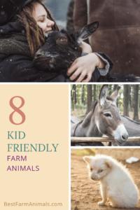 farm animals kids can raise (1)