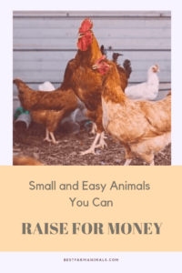 small animals to raise for money (1)