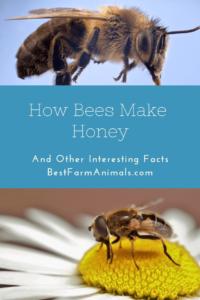Bees make honey (1)