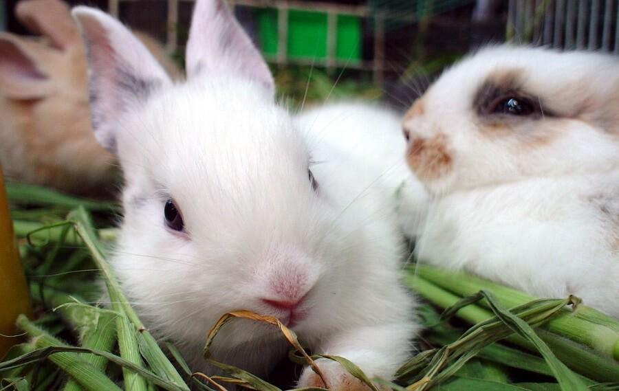 Decide why raise rabbits