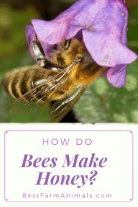 How bees make honey (1)