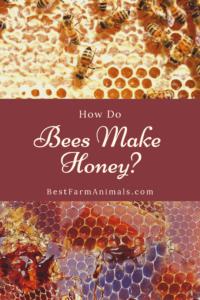 Learn how bees make honey (1)
