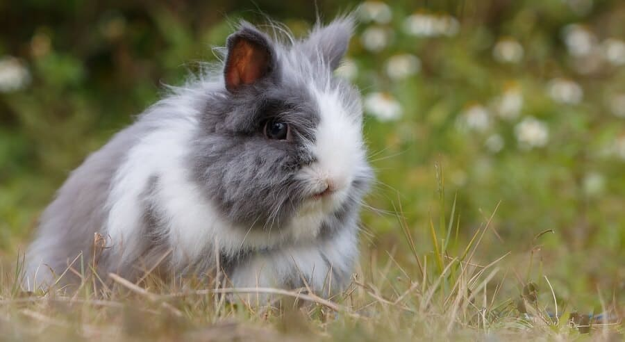 Many rabbits are raised for meat and pets