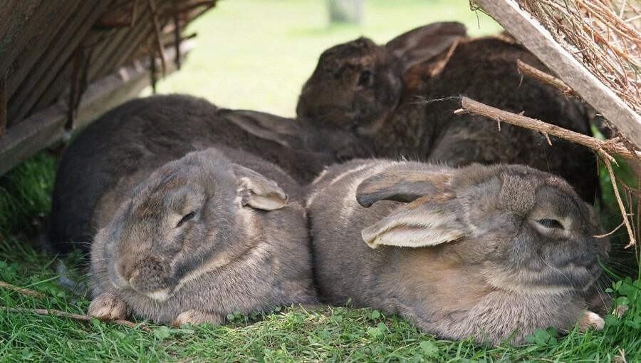 Rabbits need shelter
