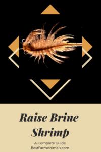 Raising Brine Shrimp (1)