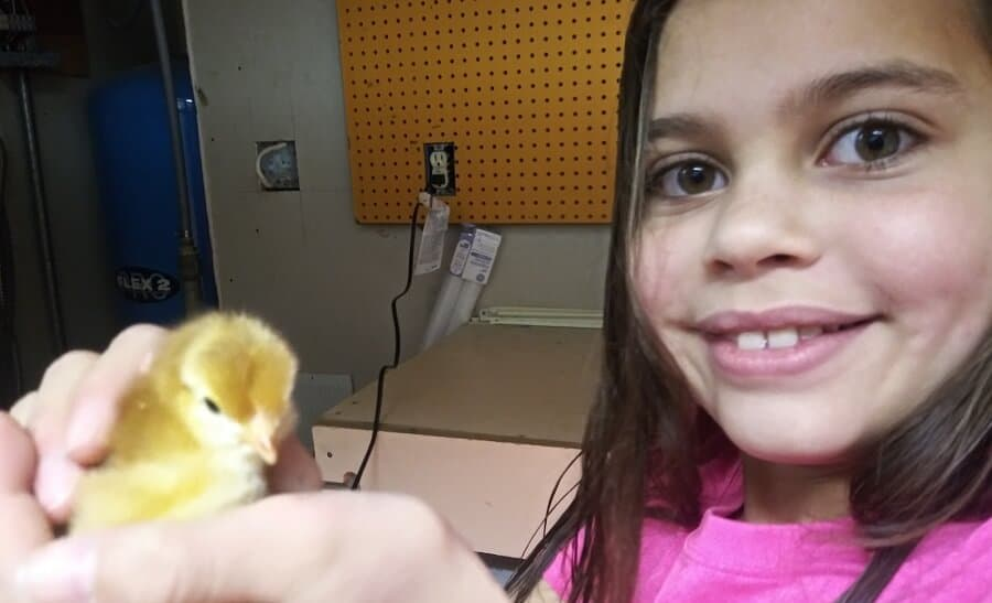 Spend time with baby chicks (1)
