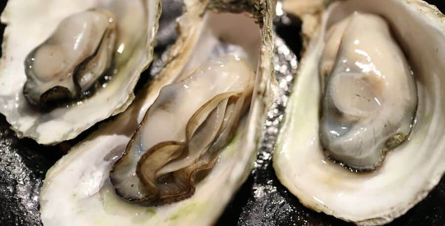 chickens need calcium. oyster shells provide