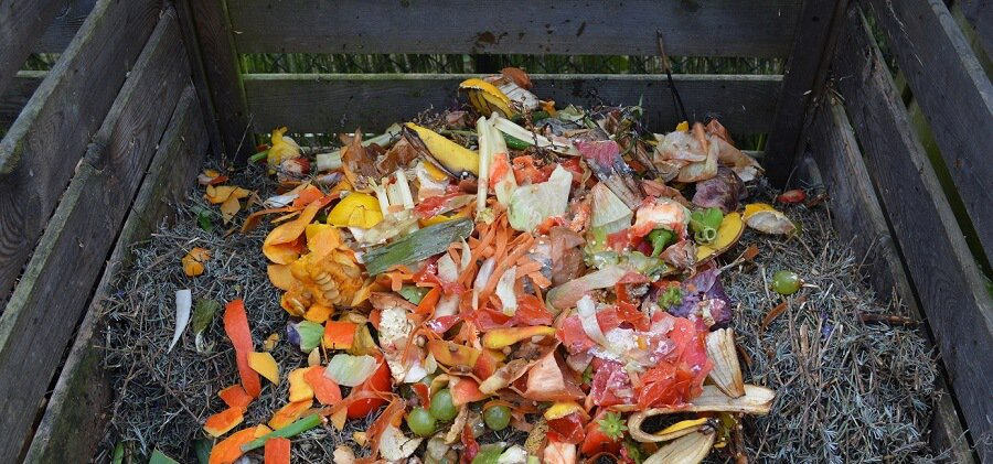 compost is a chicken feast