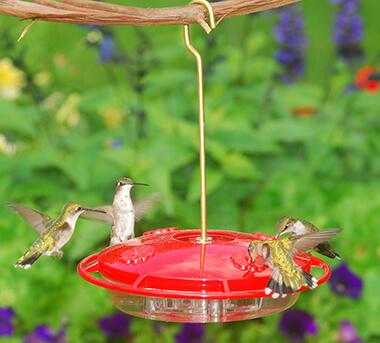 Aspects HummZinger Hummingbird Feeder (1)