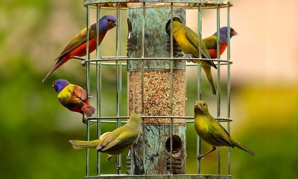 Best bird feeders to attract wild birds (1)