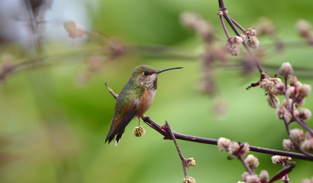 Hummingbirds like to perch where they can see food