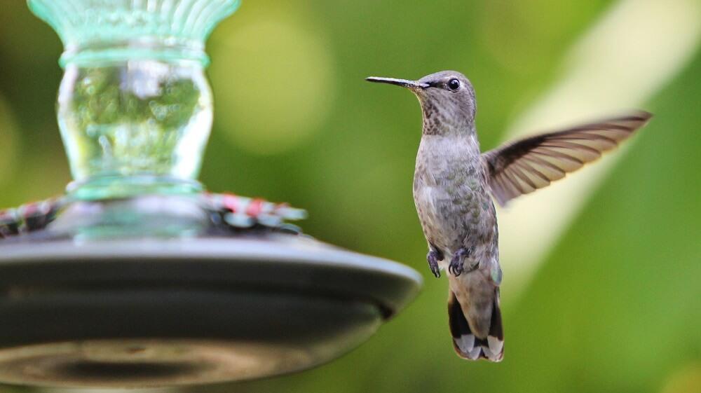 Where to place a hummingbird feeder