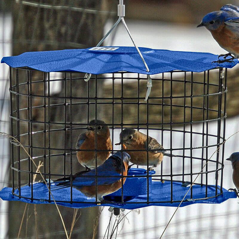 bluebird feeder in cage (1)