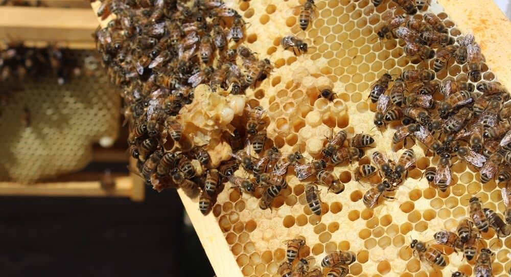 People can't make honey (1)