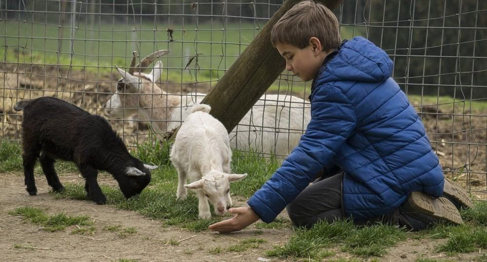 extreme worms in goats can cause death